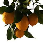 Sunset Lemons Poster