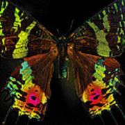 Sunset Moth Poster