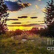 Sunset Over Field Of  Flowers Poster