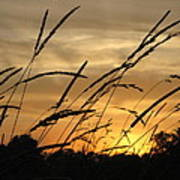 Sunset Sentinels Poster