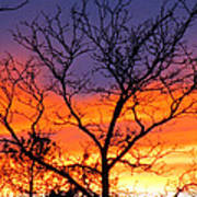 Sunset With Tree Silhouette Poster