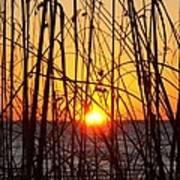 Sunset Through Grasses Poster