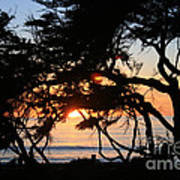 Sunset Through The Cypress Trees Cambria Poster