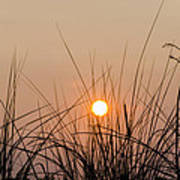 Sunset Through The Grass - Villas New Jersey Poster by Bill Cannon