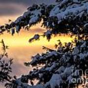 Sunset Through The Snowy Branches Poster