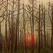 Sunset Thru The Pine Barrens Poster