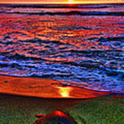 Sunset Turtle By Diana Sainz Poster