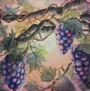 Sunset Vineyard Poster