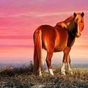 Sunset Wild Poster