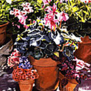 Sunshine And Flowerpots Poster