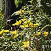 Sunshine Flower 3 Poster