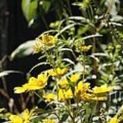 Sunshine Flowers Poster