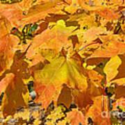 Sunshine Of Fall Poster