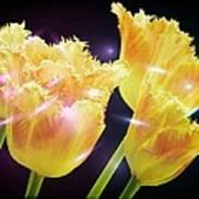 Sunshine Tulips Poster by Debra  Miller