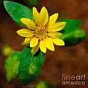Sunshine Yellow Poster