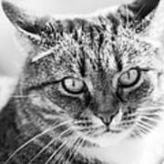 Surprised Cat Poster