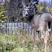 Surprised Deer Poster