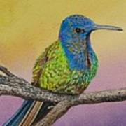 Swallow-tailed Hummingbird Poster