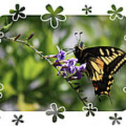 Swallowtail 4 With Flower Framing Poster