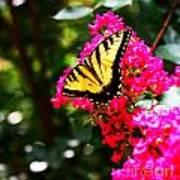 Swallowtail Beauty  Poster