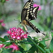 Swallowtail Butterfly 01 Poster
