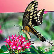 Swallowtail Butterfly 04 Poster