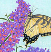 Swallowtail Butterfly And Butterfly Bush Poster