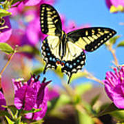 Swallowtail In Flight Poster