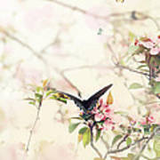 Swallowtail In Spring Poster