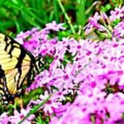 Swallowtail Spring Flowers Poster