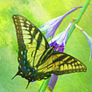 Swallowtail Visits Hosta Flowers Poster