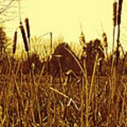 Swamp Grass Poster