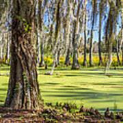 Swamp In Magnolia Plantation And Gardens Charleston Sc Poster