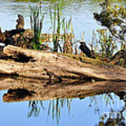 Swamp Scene Poster by Al Powell Photography USA