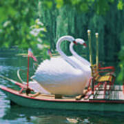 Swan Boats In A Lake, Boston Common Poster
