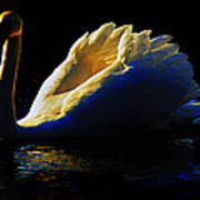 Swan In Golden Light Poster