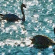 Swan Lake Poster by Ayse Deniz