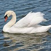 Swan On Blue Waves Poster