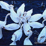 Swan Party Poster