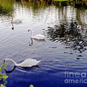 Swan's 3 In A Group. Poster