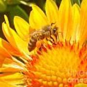 Sweet Bee Poster