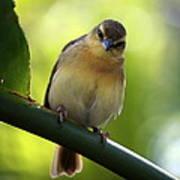 Sweet Bird On Branch Poster