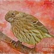 Sweet Female House Finch 3 - Digital Paint Poster
