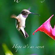 Sweet Hummingbird Birthday Card Poster