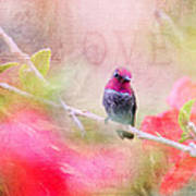 Sweet Hummingbird Love Poster