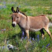Sweet Miniature Donkey Poster