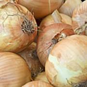 Sweet Onions Nj Grown Poster