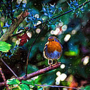 Sweet Robin Redbreast - Impressions Poster