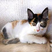 Sweet The Kitten Poster