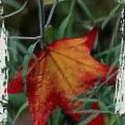Sweetgum Leaf Poster